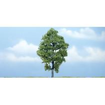 Premiumbäume Hickory