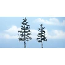 Premiumbäume Kiefer
