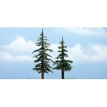 Premiumbäume Küstenkiefer I