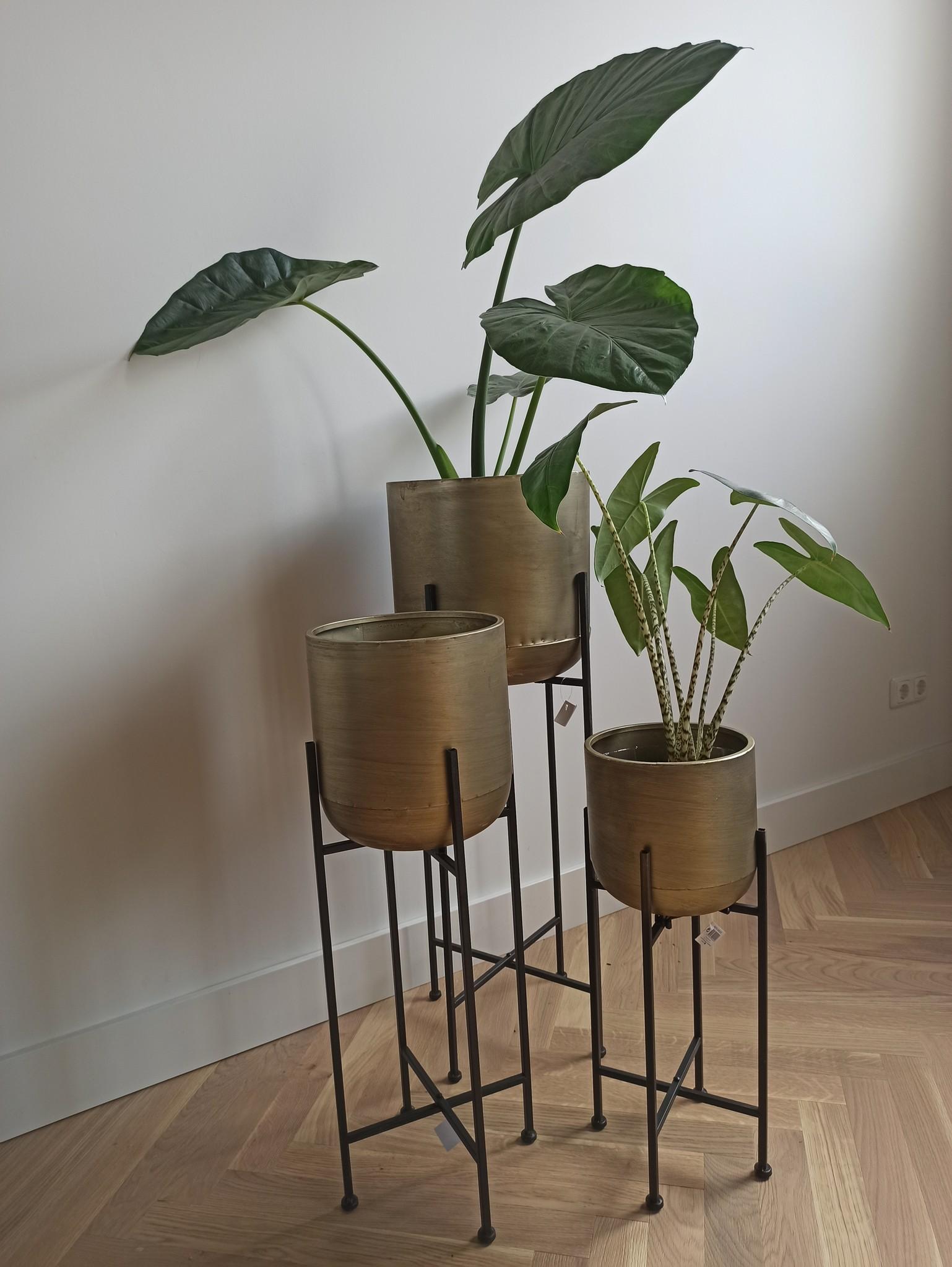 Planter Champagne -set van 3-