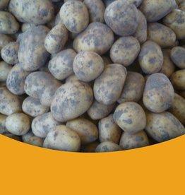Licht kruimig Nieuwe oogst Zeeuwse Klei Aardappelen ( Meerlanders)