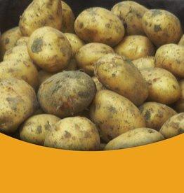 Patat Aardappelen Nieuwe oogst Zeeuwse Patat Aardappelen