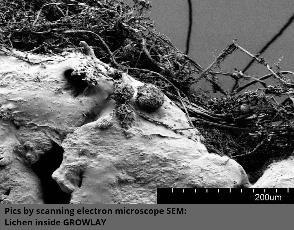 Lay Filaments 1,75 mm GrowLay filamento per coltura idroponica, Marrone