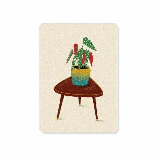 Illu-ster Ansichtkaart Begonia Maculata