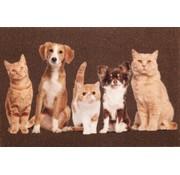 paillasson motif chats et chiens