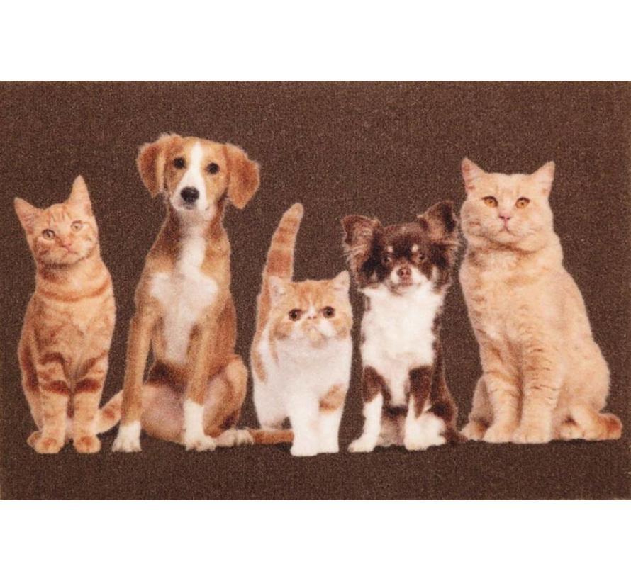 Tapis d'entrée chats et chiens