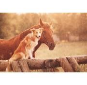 Deurmat foto paard en hond
