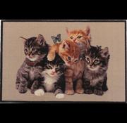 Paillasson photo chatons