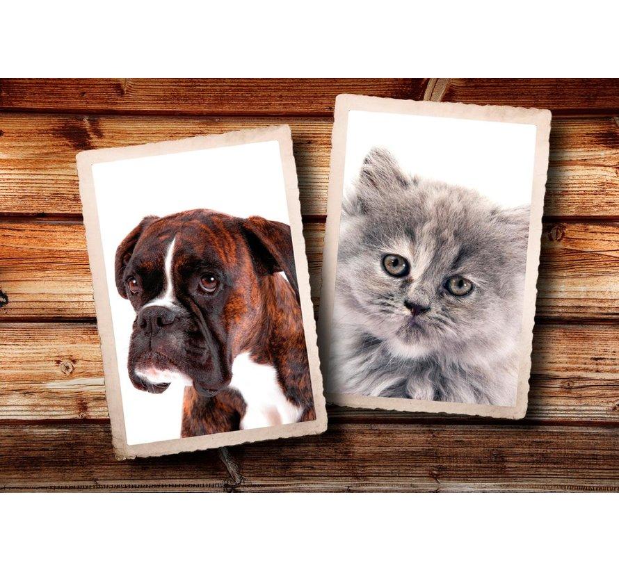 Paillasson photo chat et chien