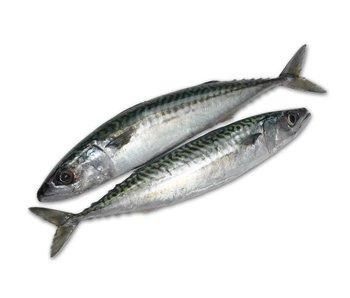 Verse Makreel, (ca.300 gram)