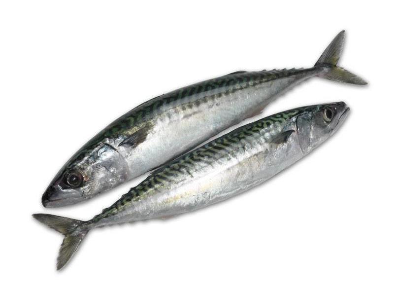 Makreel vers, 1 stuk (ca.300 gram)