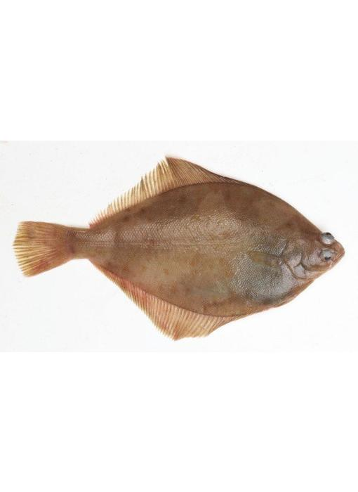 Schar vers, (ca.250 gram)