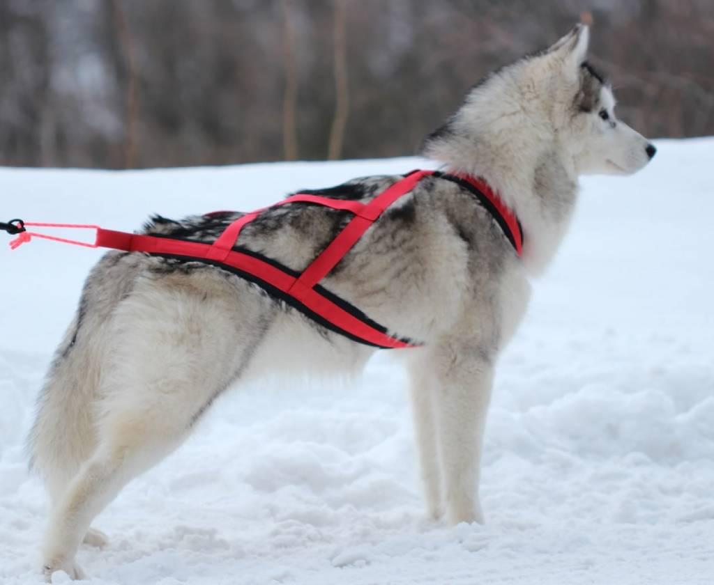 Northern Howl X-Back harnais pour chien pour le vélo, ski-joering, scooter, traîneau, Color rouge
