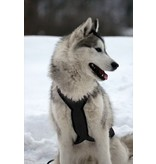 Harnais pour chien à traction, style X - dos - noir + laisse