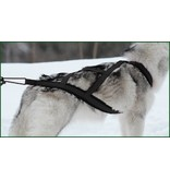 Northern Howl Canicross-Set,  harness X-Back, Joring- Line - black