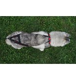 Northern Howl Sport harnais de chien réglable
