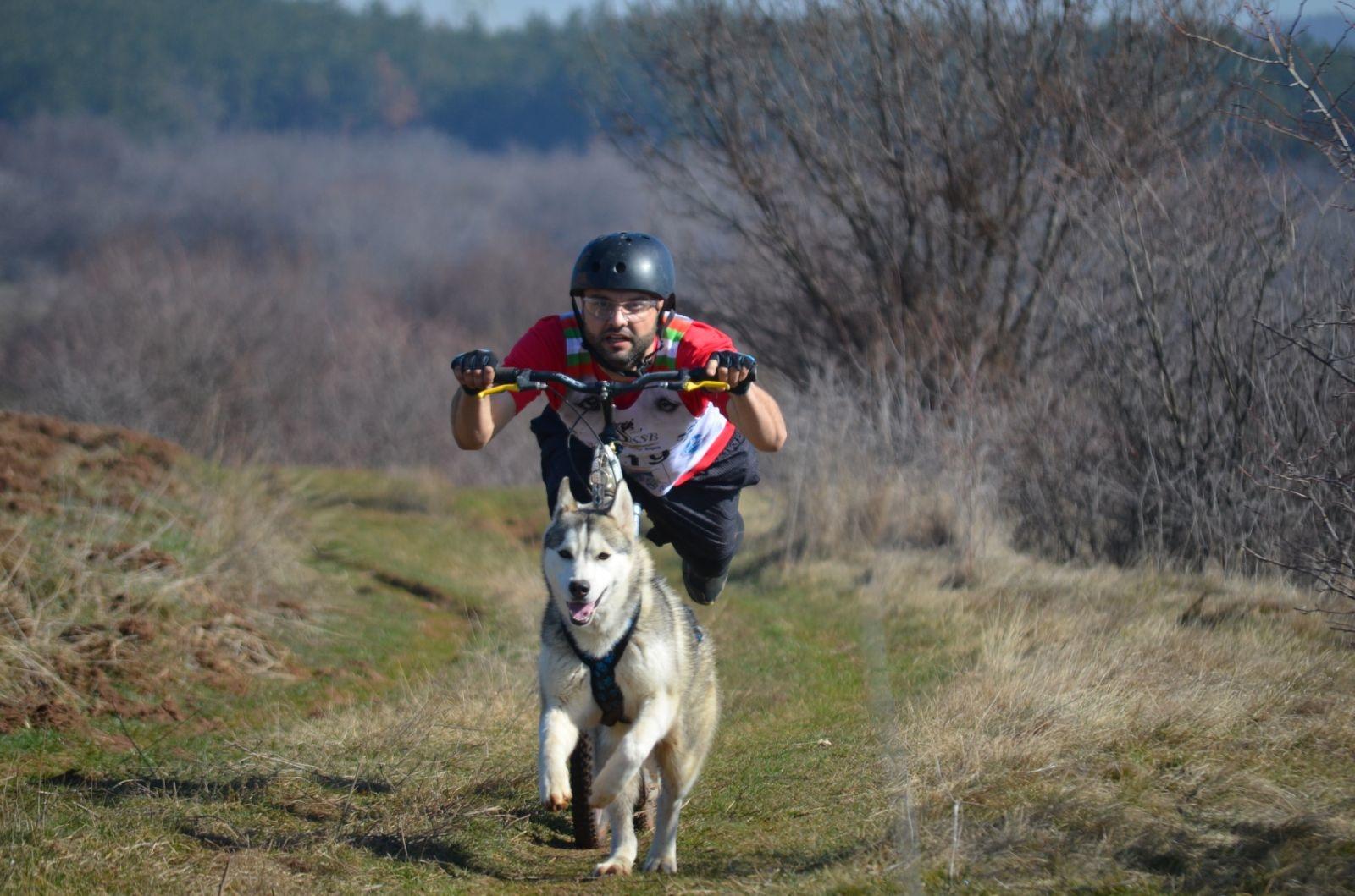 Northern Howl Northern Howl  X-Back harnais pour chien pour le vélo, ski-joering, scooter, traîneau