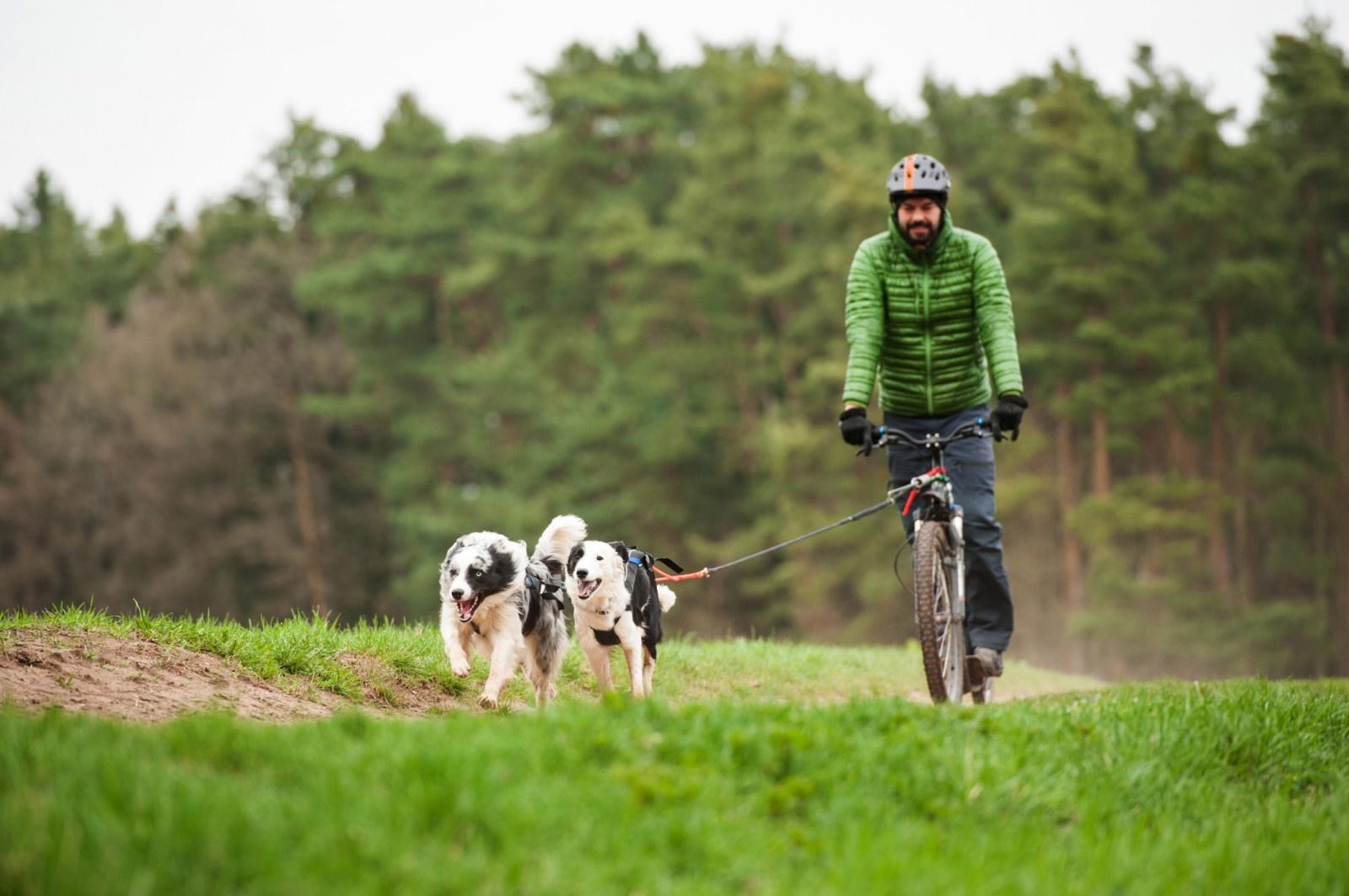 Hunde Zuggeschirr X Back von Northern Howl  in Schwarz-Neongelb