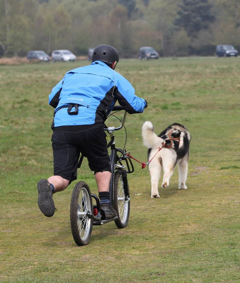 Pawtrekker Pawtrekker Dog Scooter - Full Suspension model