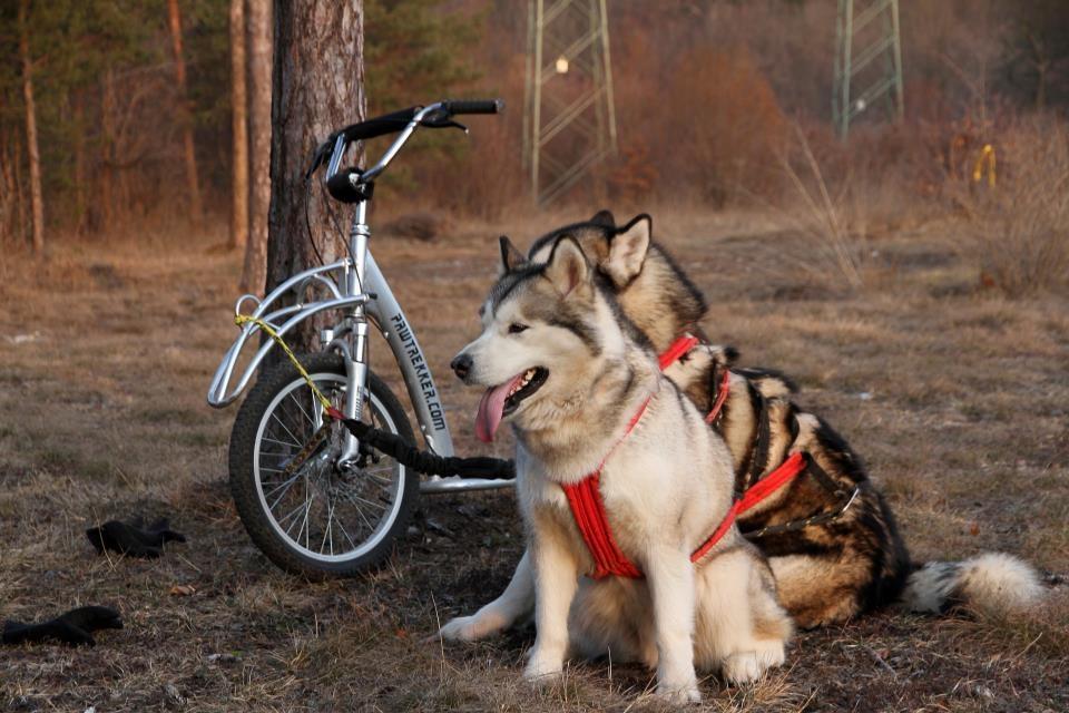 Pawtrekker Scooter pour chien Pawtrekker - Modèle à suspension complète