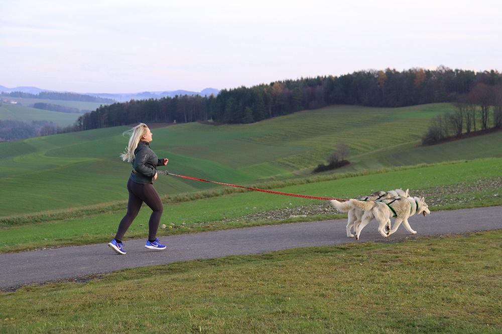 LasaLine LASALINE X-Back Geschirr in Schwarz mit Neongrüner Airmesh-Polsterung