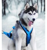 Northern Howl Northern Howl Weight Pulling Dog Harness, X-Back Style - Blue - used - very good condition