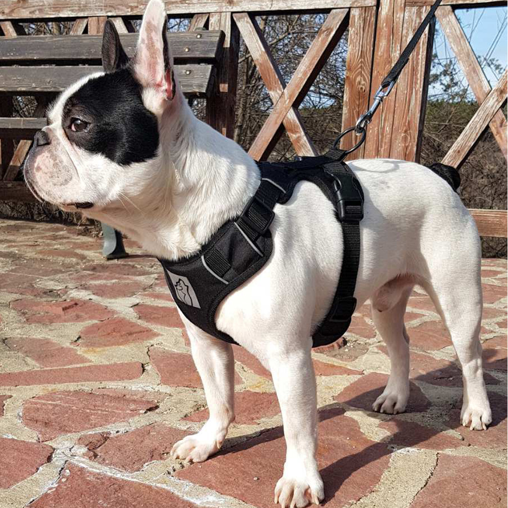 Northern Howl Northern Howl Canicross harness adjustable