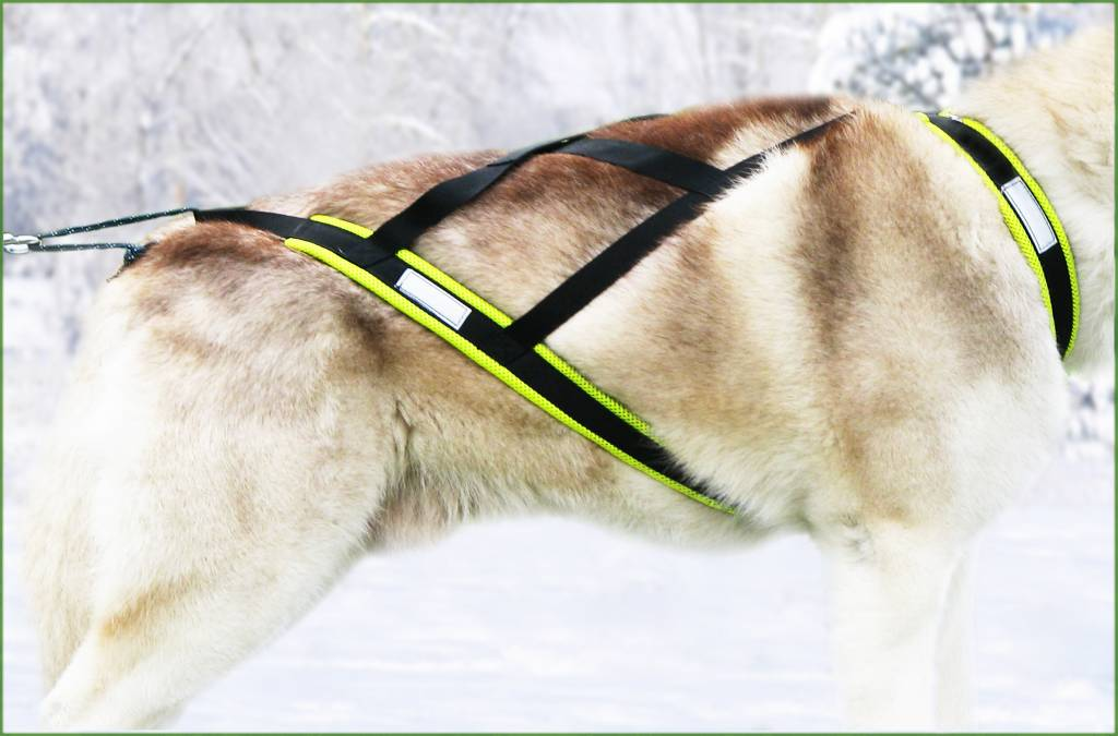 Northern Howl Hunde Zuggeschirr X Back von Northern Howl  in Schwarz-Neongelb