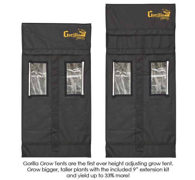 Gorilla Shorty 61x76cm
