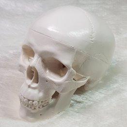 MPK Nails® Totenkopf zum Selbstgestalten