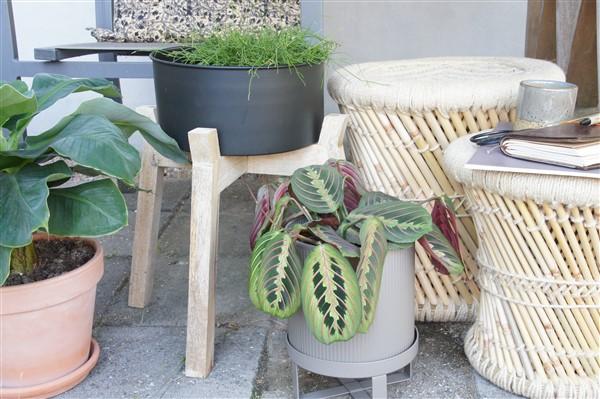 Madam Stoltz Kussen : Beste afbeeldingen van madam stoltz asian furniture