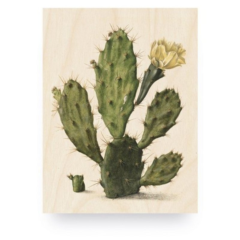 KEK Amsterdam-collectie Print op hout Botanical Cactus S