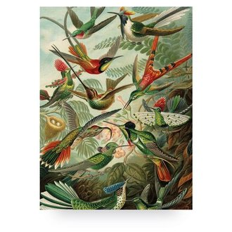 KEK Amsterdam Wood print Exotic Birds L