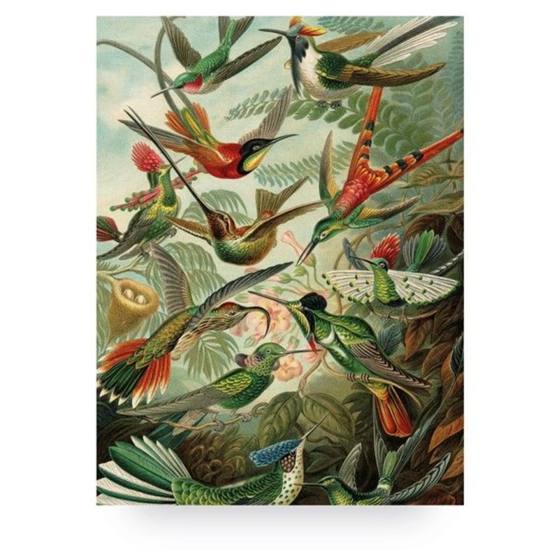 KEK Amsterdam-collectie Wood print Exotic Birds L