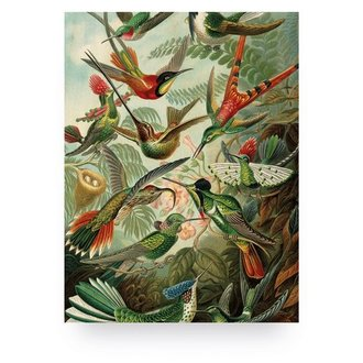 KEK Amsterdam Wood print Exotic Birds S
