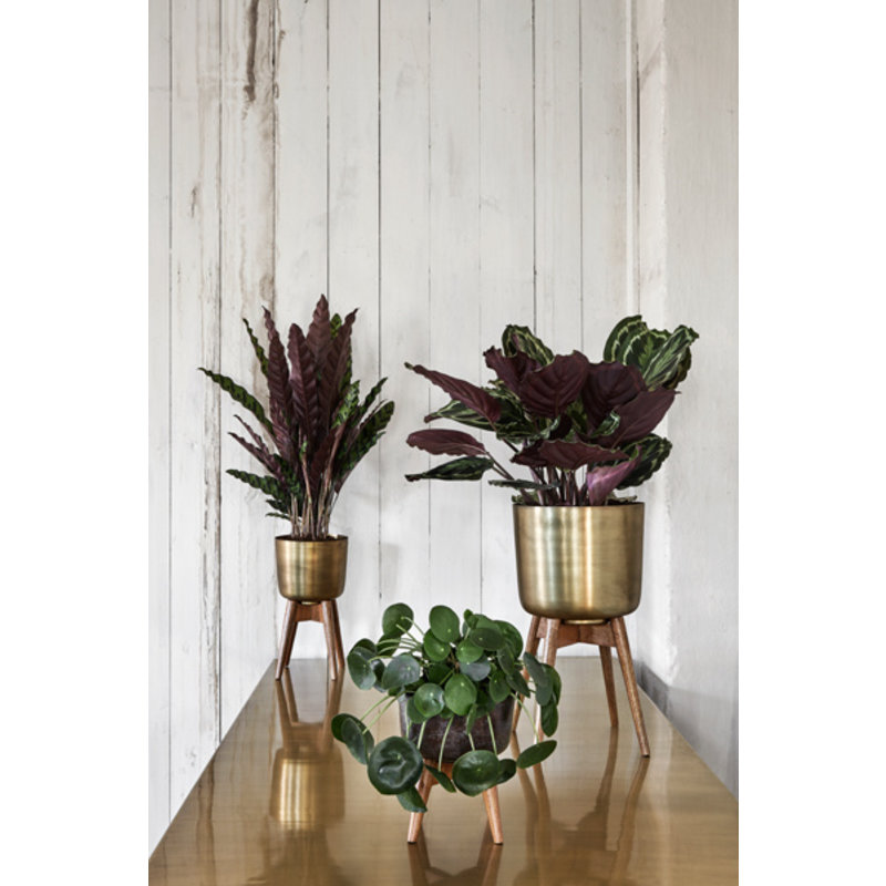 Nordal-collectie Planter on stand, small, brass/wood