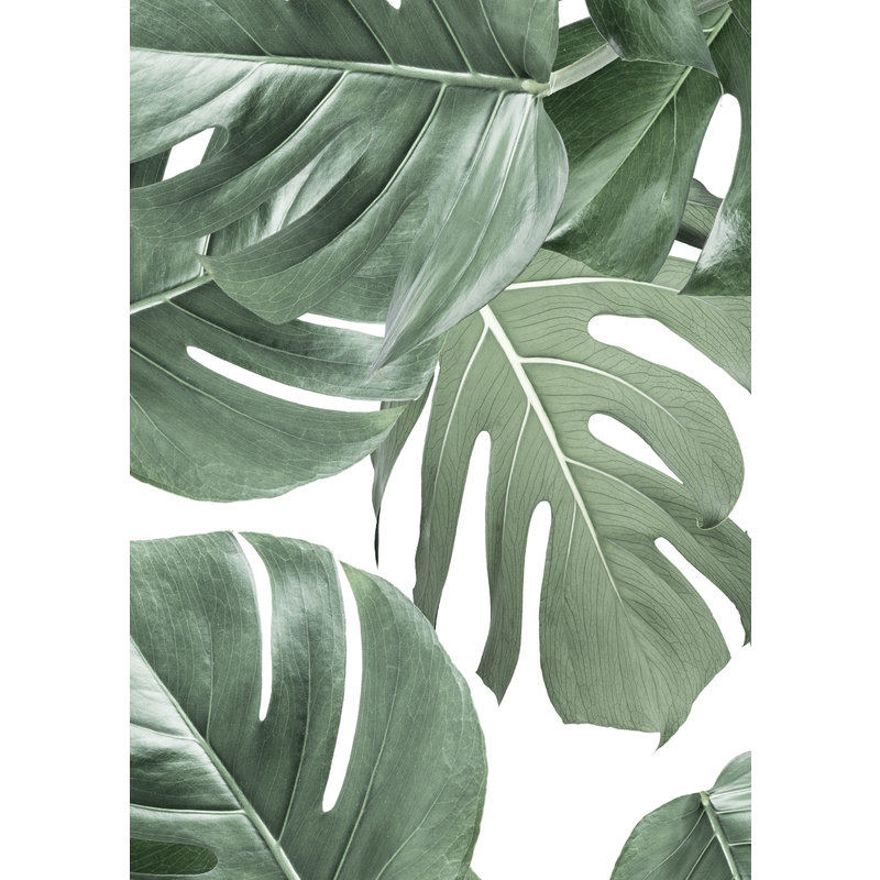 KEK Amsterdam-collectie Wallpaper Monstera white