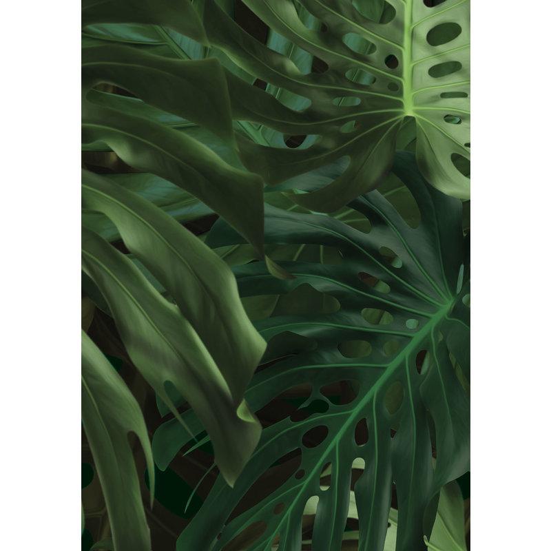 KEK Amsterdam-collectie Behang Monstera leaves