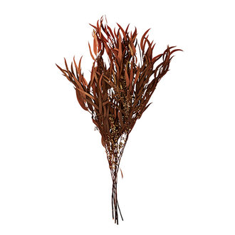 Madam Stoltz Dried flowers