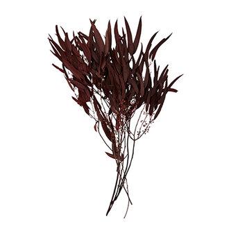 Madam Stoltz Boeket droogbloemen Wijnrood 80 gram