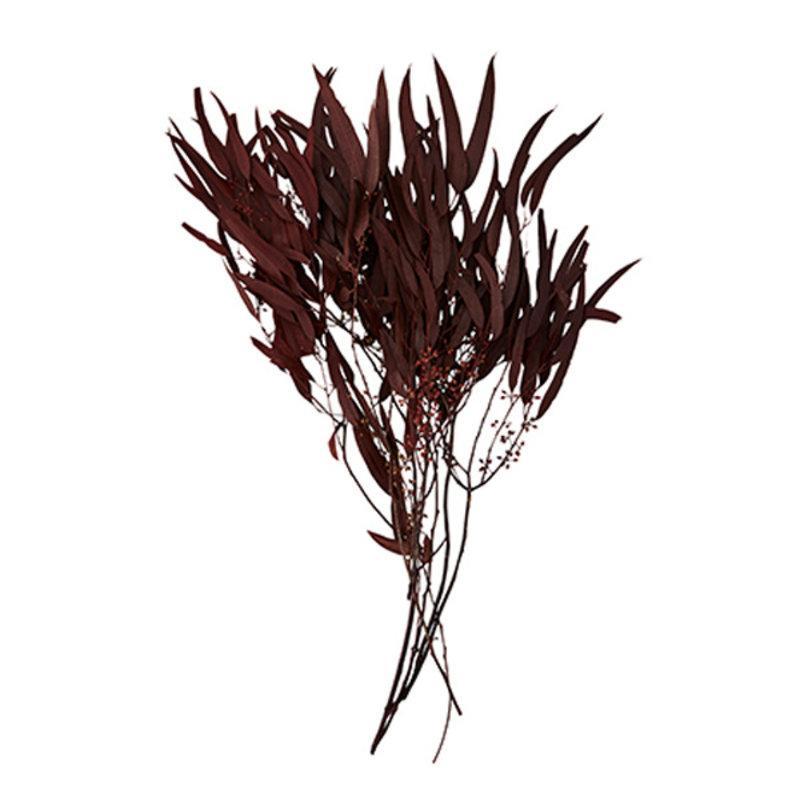 Madam Stoltz-collectie Boeket droogbloemen Wijnrood 80 gram