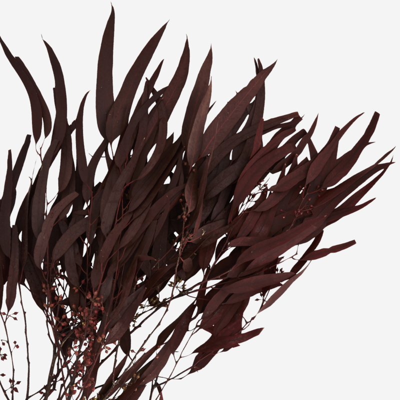 Madam Stoltz-collectie Dried flowers
