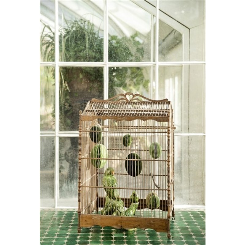 Bungalow-collectie Parrots sitting on Branch Grass Green
