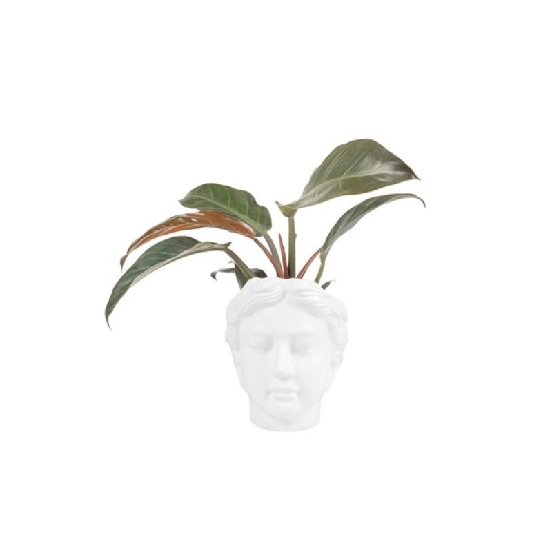 Zusss-collectie Flowerpot head woman ceramic white