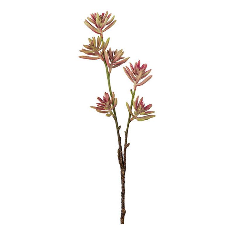 Mr Plant-collectie Kunsttak Succulent (vetplant) roze 50 cm