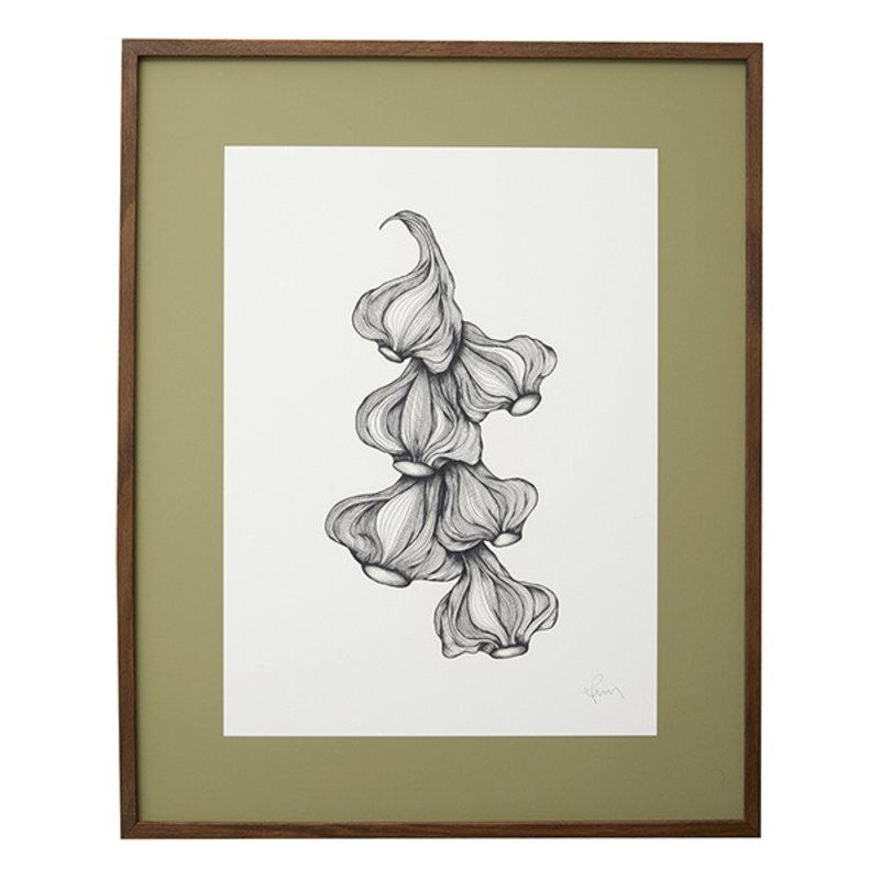 Nordal-collectie Illustratie GARLIC met donker eiken frame