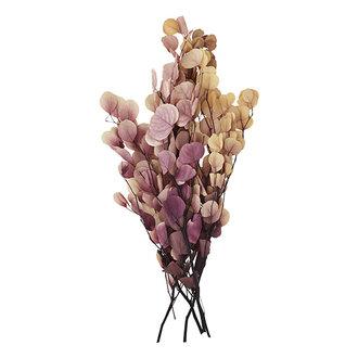 Madam Stoltz Droogbloemen roze/creme