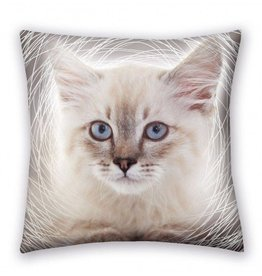 CharactersMania Kitten Cushion