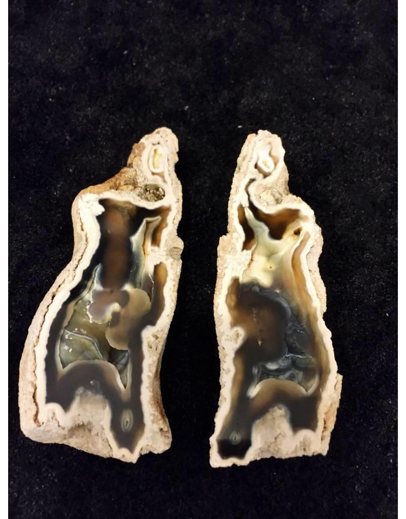 Koraal fossiel paar