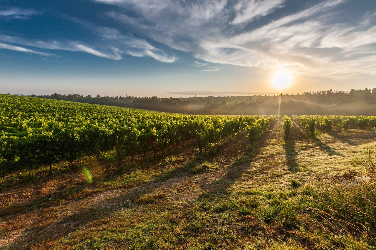 Belgische wijn in de kijker